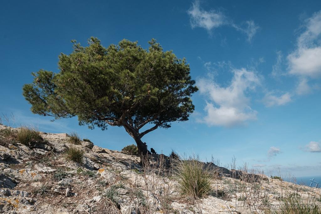 kl_20171024_Mallorca_Tag05_0039.jpg